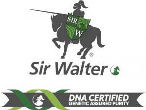 Sir Walter DNA Certified