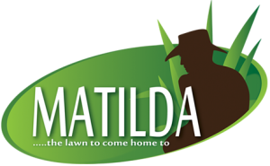 Matilda Soft Leaf Buffalo